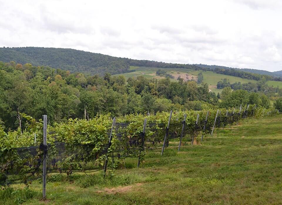 Arterra Winemaking Fauquier Virginia Wine - vineyards landscape